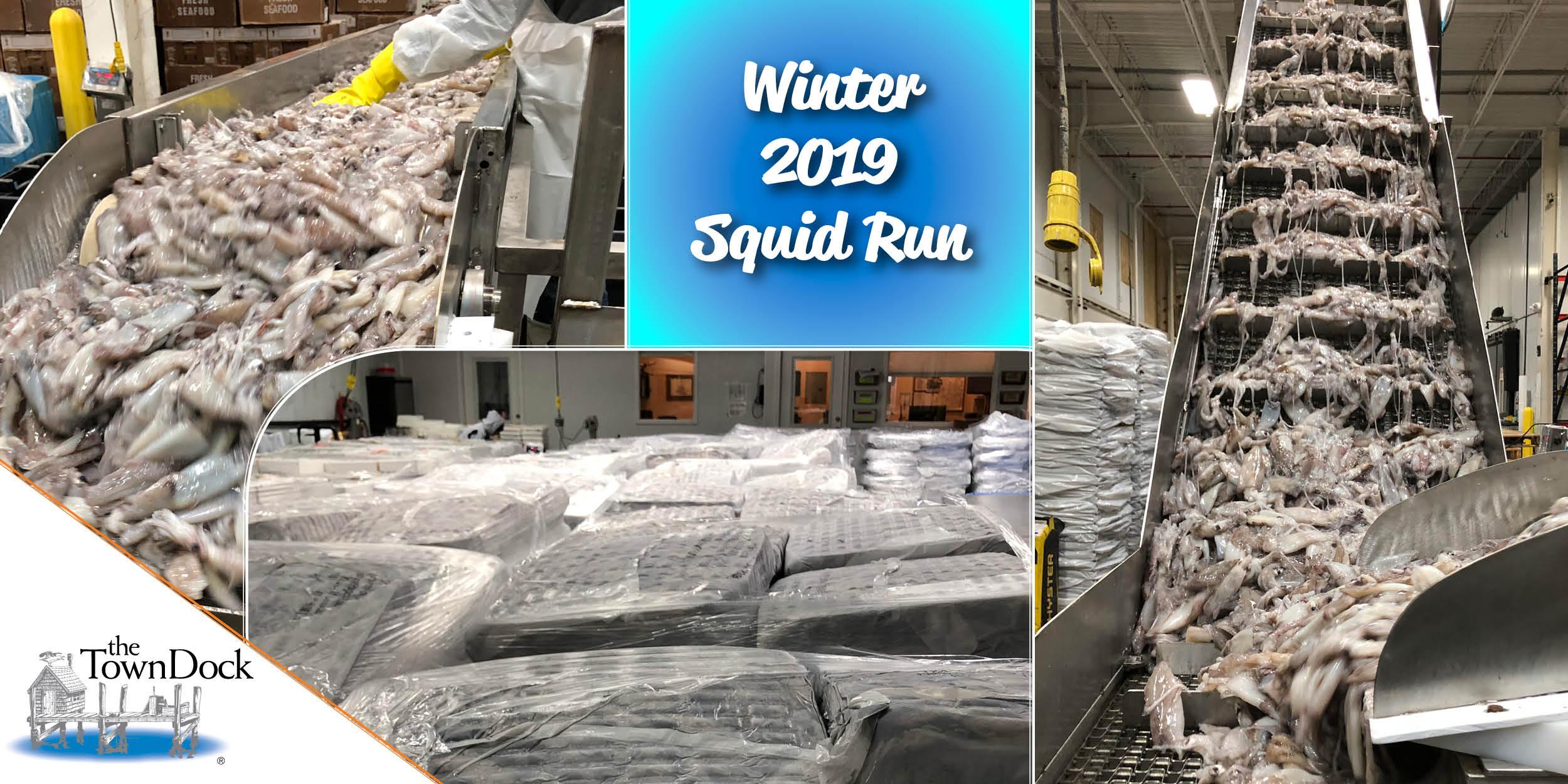 Winter 2019 Squid Run